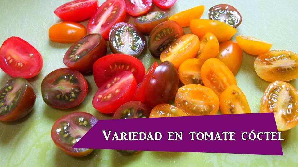 tomate cherry variedades